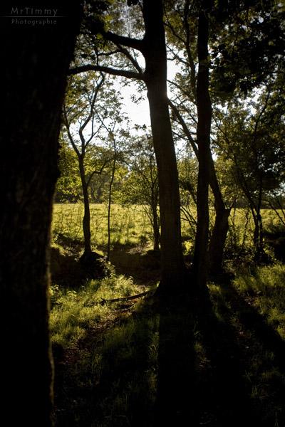 http://la-rose-noir.chez-alice.fr/BlogPhotoLoireAtlantique/a_loree_du_bois_campagne_contre_jour_l_immaculee_paysage_mrtimmy_photographie.jpg